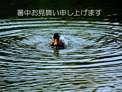 _MG_8421 (2) - コピー - コピー.JPG