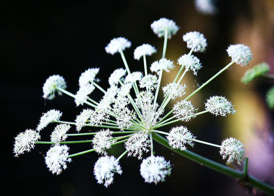 森の花火.JPG