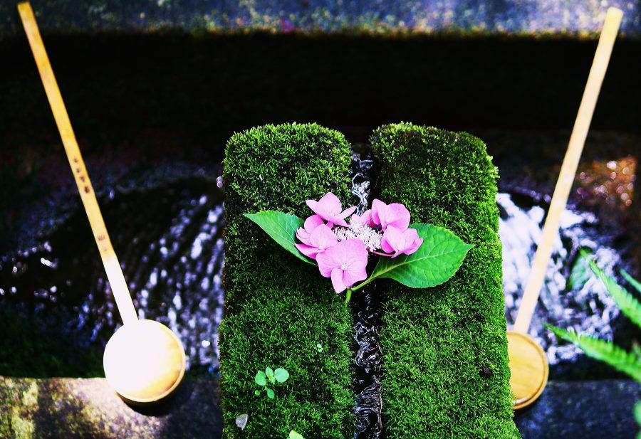 神社手洗に粋な紫陽花が.JPG