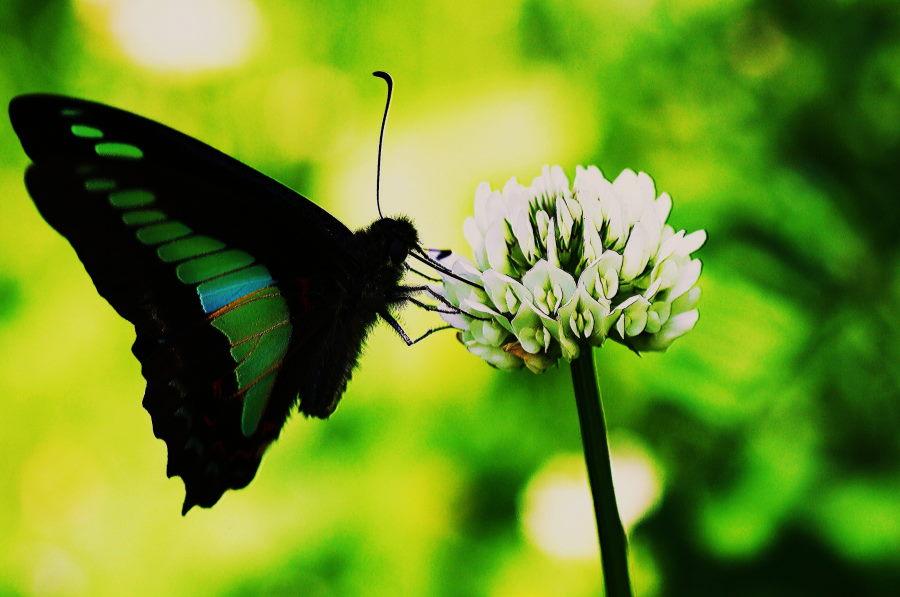 IMG_0062 蝶の羽根は美しいな~.JPG